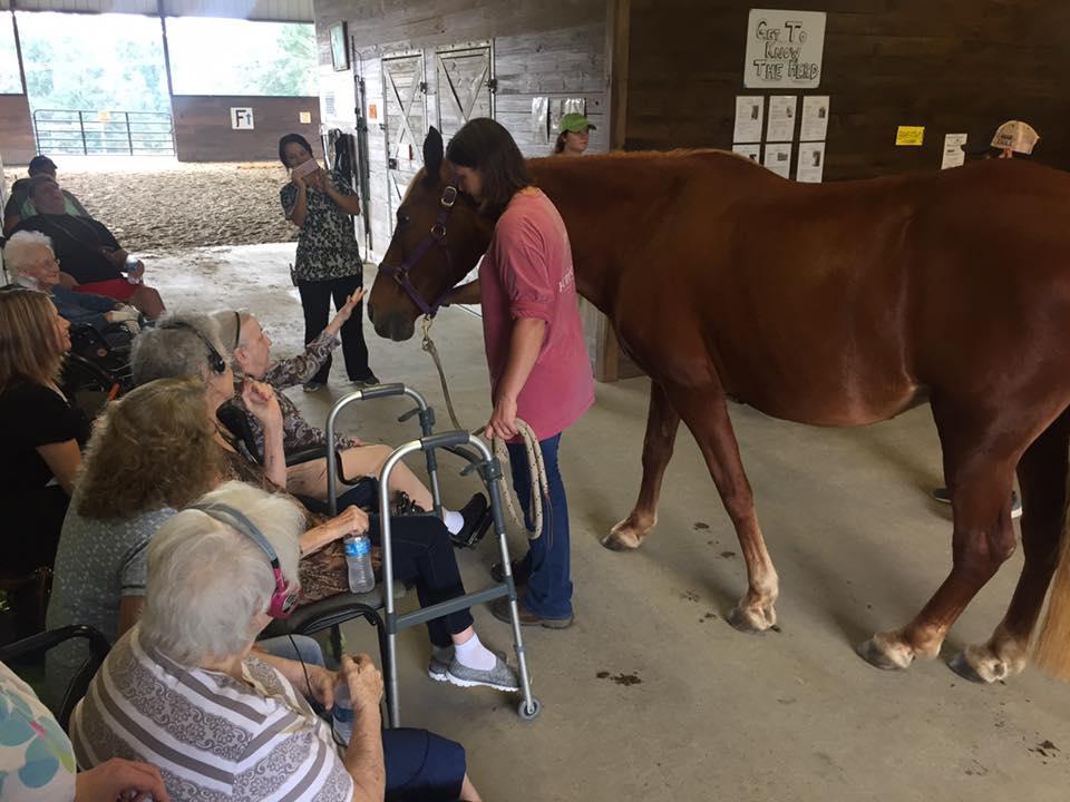 hopehorses17-62